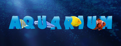 Word AQUARIUM with many tropical fish Stock Photos