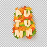 Word AUTUMN composition with green yellow red leaves with shadow in paper cut style. Fall craft leaf 3d realistic. Letters for design poster, banner, flyer T Royalty Free Stock Photography