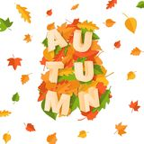 Word AUTUMN composition with green yellow red leaves on white background in paper cut style. Fall leaf 3d realistic. Letters for design poster, banner, flyer T Royalty Free Stock Photos