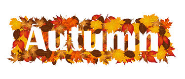Word Autumn covered in autumnal leaves. Royalty Free Stock Photo