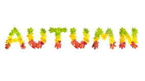 Word AUTUMN made of autumn maple leaves in bright colors Stock Photo