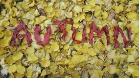 the word autumn written in red leaves Stock Photo
