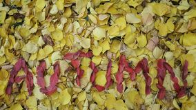 the word autumn written in red leaves stock photography