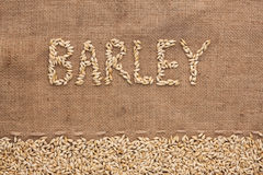 Word barley written on burlap Royalty Free Stock Image
