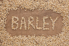 Word barley written on burlap Royalty Free Stock Images