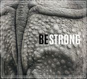 Word Be Strong. Closeup of the strong armor of a rhinoceros. Royalty Free Stock Images