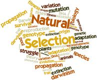 Word cloud for Natural Selection. Abstract word cloud for Natural Selection with related tags and terms Royalty Free Stock Images