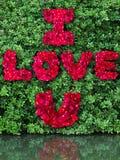 Word de l'amour fait à partir de la rose de rouge Image libre de droits