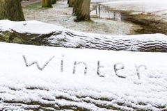 Word de winter in sneeuw op eiken boomboomstam die wordt geschreven Royalty-vrije Stock Fotografie