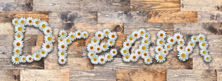 Word Dream Wood Background. Word made from real daisy flowers on wood background Royalty Free Stock Photography