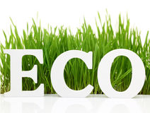 Word Eco with fresh grass Stock Photo