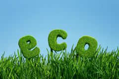 Word of eco on grass Stock Photo