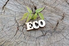 The word ECO is made of wooden letters on an old stump beside a young green sprout. Copy space for design. The concept of nature p. The word ECO is made of stock image