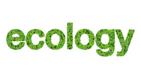 Word ecology made from green leaves isolated on white background. Royalty Free Stock Photos