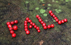 A word fall. Written with cranberries Royalty Free Stock Image