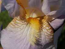The Word of Flowers - in the home garden,. Various varieties of Irises stock image
