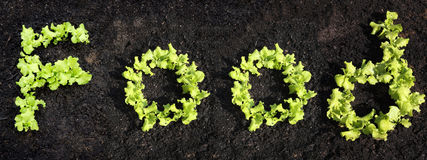 Word food. Made of growing lettuce Royalty Free Stock Photos