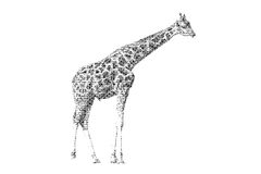 Word giraffe mixed to be figure of giraffe, with typography styl Royalty Free Stock Photo