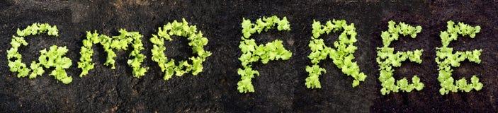 Word GMO GRATUIT Images stock