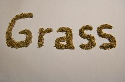 The word grass was written with real grass seed royalty free stock photography