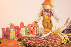 The word Harvest, Corn, Scarecrow, Fall Leaves. The word Harvest, Corn and Scarecrow on Colorful Fall Leaves Background stock image