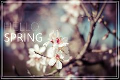 Word Hello Spring. Flowers of the cherry blossoms on a spring da Stock Photography