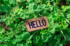 The word hello wooden tag. On Clover stock photography