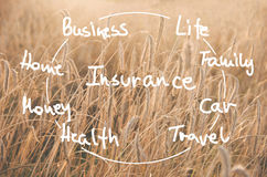 Word Insurance handwritten on a field of wheat ready to be harvested. Agricultural insurance  concept Stock Photos