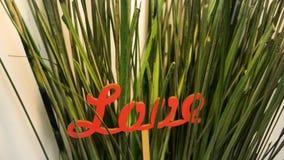 Word Liefde uit rode brieven in groen grasclose-up dat wordt bijeengezocht stock footage