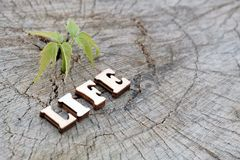 The word LIFE is made of wooden letters on an old stump beside a young green sprout. Copy space for design. The concept of nature. The word LIFE is composed of stock images