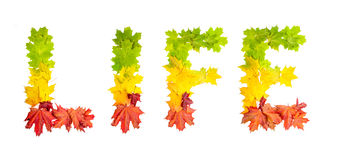 Word LIFE made of autumn maple leaves in bright colors Stock Images
