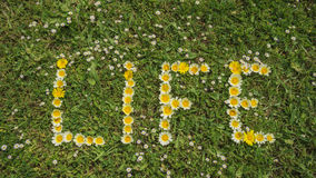 Word LIFE written with blossoms Royalty Free Stock Image
