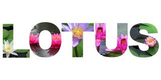 Word lotus Stock Images