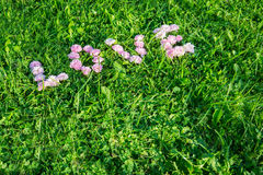 Word Love from the buds of roses on green grass Stock Photos