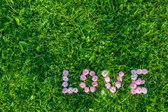 Word Love from the buds of roses on green grass Royalty Free Stock Photography