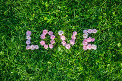 Word Love from the buds of roses on green grass Royalty Free Stock Image