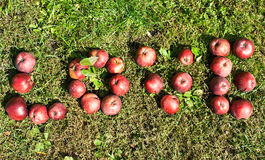 Word love with red-ripe apples Stock Images