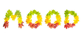 Word MOOD made of autumn maple leaves in bright colors Stock Photography