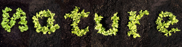 Word nature with lettuce Stock Photo