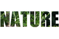 Word NATURE over Fern leaves in a clearing in the forest Royalty Free Stock Photo