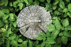 Word nature of wooden beads on a tree stump royalty free stock photos