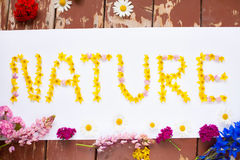 Word NATURE written with yellow flowers on white Stock Image