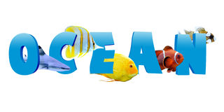 Word OCEAN with many tropical fish Stock Photography