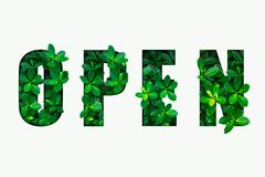 Word OPEN van groene bladeren vector illustratie