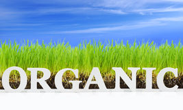 Word Organic with fresh grass Stock Images