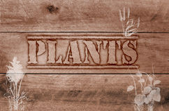Word plants written on wooden brown background Stock Photos