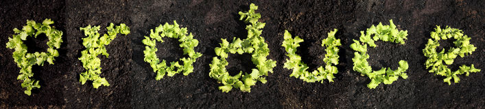 Word produce. Made of young lettuce Stock Photo