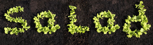 Word salad with lettuce Royalty Free Stock Image