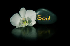 Word soul and white orchid Stock Images