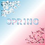 Word spring. Cherry blossoms. Spring flowers Royalty Free Stock Image
